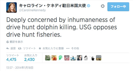 Essay on dolphin torcher in japan